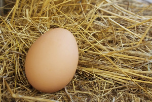 Eggs 22