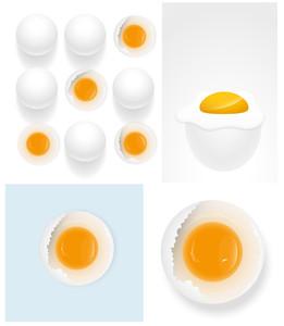 Eggs Vector Illustrations