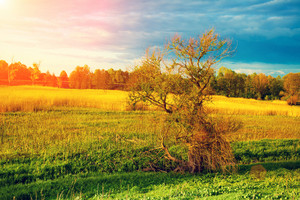 Evening in countryside. Rural landscape
