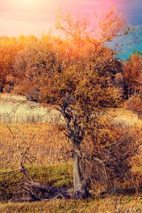 Evening rural landscape in autumn