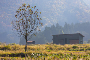 Fall season at Shirakawa-go. Japan