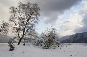 Fallen tree in winter