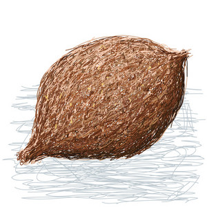 False Durian Nut Whole