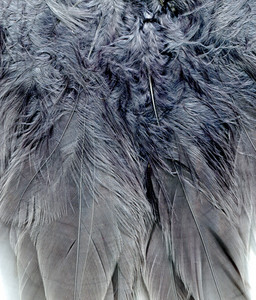 Feathers 2 Texture