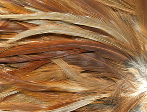 Feathers 3 Texture