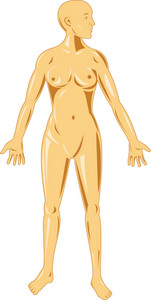 Female Human Anatomy Standing