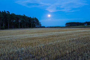 Field landscape under rising moon