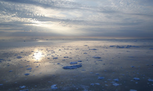 Field of ice floes during a golden sunrise