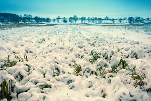 Field with grass covered with first snow