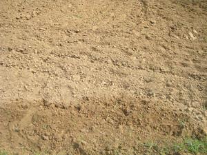 Field_ground_texture