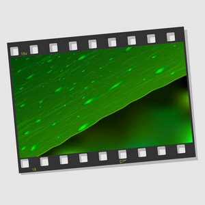 Film Frame With Leaf And Drops