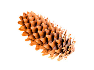 Fir Cone Isolated On White