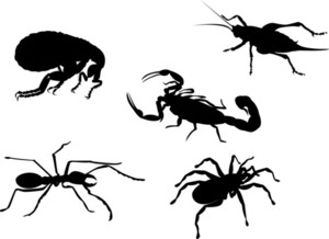 Flea Cricket Ant Spider Scorpion Insect