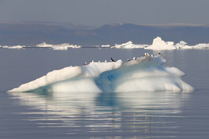 Flock of birds perched on an ice floe
