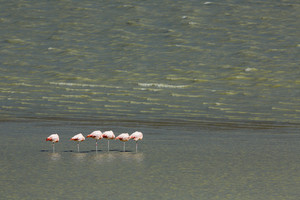 Flock of flamingos standing on one leg in sunlit waters