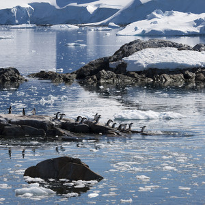 Flock of penguins in icy, rocky waters