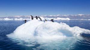 Flock of penguins on a sunlit iceberg