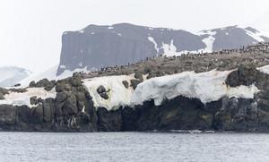Flock of seabirds on a snowy, rocky cliff
