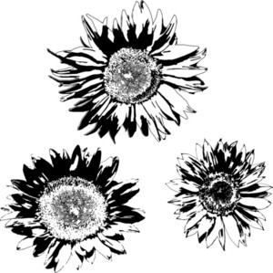 Floral 7 Vector
