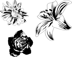 Floral 8 Vector