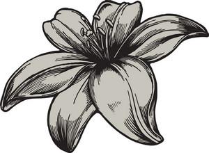 Floral Vector Element