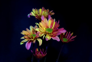 Flower Bunch Isolated On Black Background