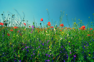 Flower meadow against the sky