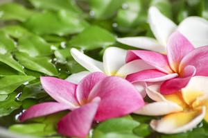 Flower spa massage on water
