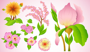 Flower Vectors Set
