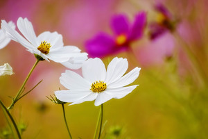Flowers Close Up Background