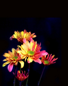 Flowers Isolated On Black Background