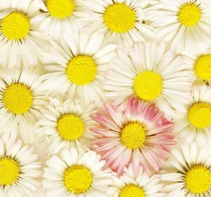 Flowers Of Spring In Bloom