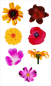 Flowers Vector Designs