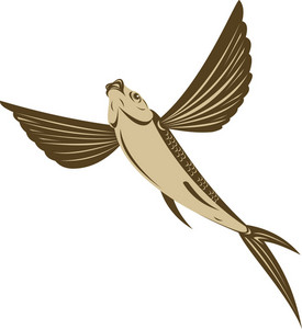 Flying Fish Retro Style