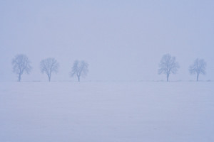Foggy winter field landscape with trees. Bad weather landscape
