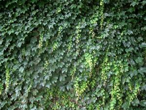 Foliage 1 Texture