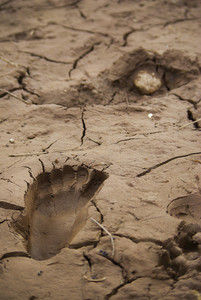 Footprint on soil