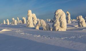 Footprints past trees buried under heavy snowfall