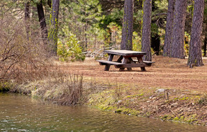 Forest Picnic Place