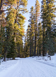 Forest Snow Road