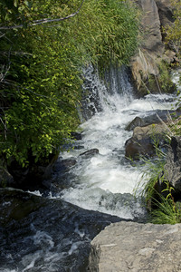 Forest Waterfall 276