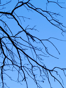 Frame In The Form Of The Lumen Of Interwoven Branches Of Trees Against The Blue Sky With White Clouds