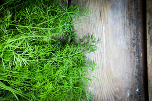 Fresh Dill On Rustic Wooden Table