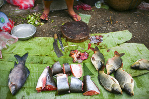 Fresh fish at the Market in Luang Prabang, Laos