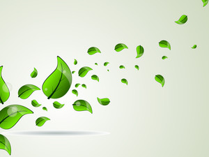 Fresh Green Leave Illustration For Vector