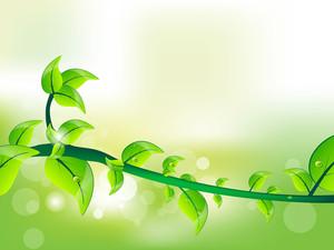 Fresh Green Leave Illustration For Vector