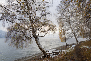 Frosty trees at the edge of a lake