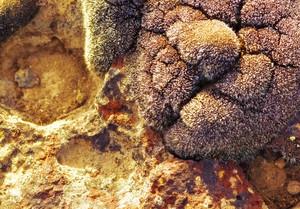 Fungus Grunge Rock Texture