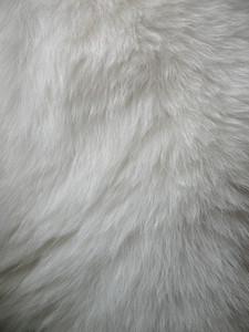 Fur 1 Texture