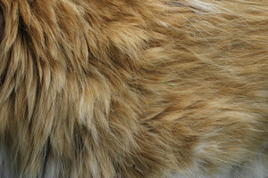Fur 12 Texture